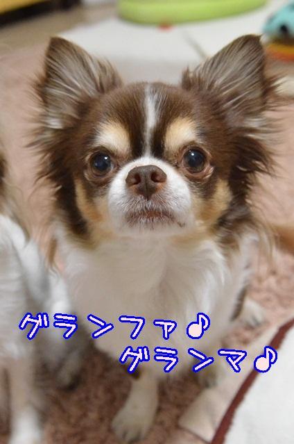DSC_2999_20140309202515eda.jpg