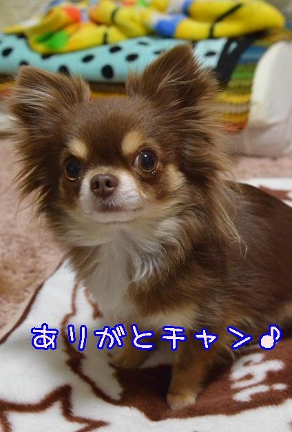 DSC_3000_201403092025173f4.jpg