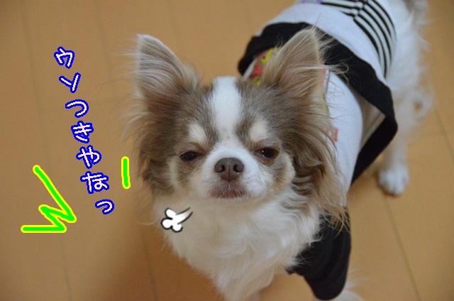 DSC_3116.jpg