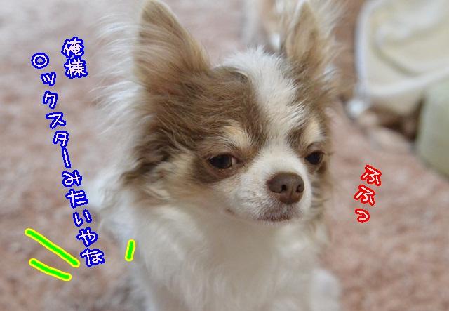 DSC_3291_201403291943017a3.jpg