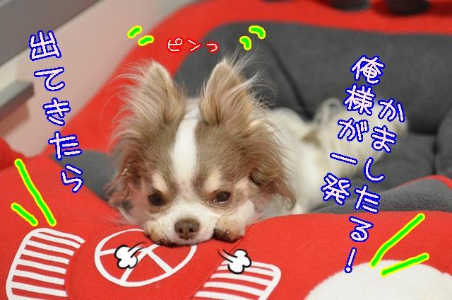 DSC_3551_20140412194847430.jpg
