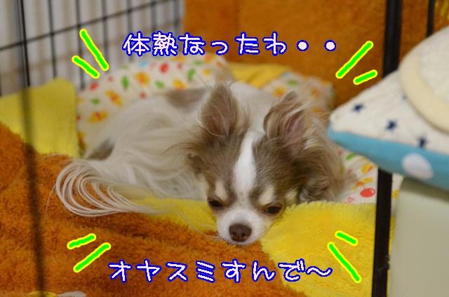 DSC_3569.jpg
