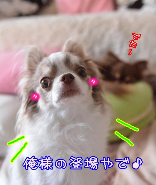 DSC_3633_20140424170454db1.jpg