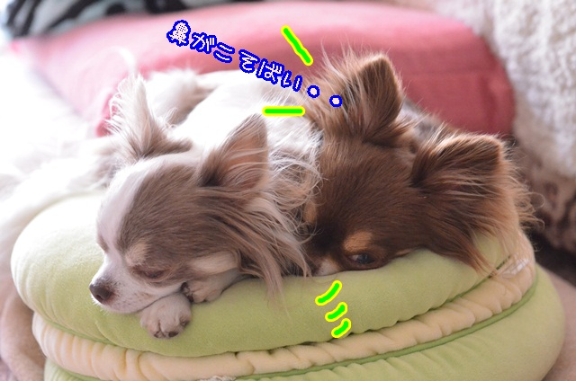 DSC_3655_20140427205822c7b.jpg