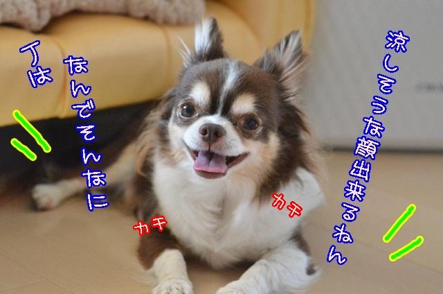 DSC_3698_201405022014267a1.jpg