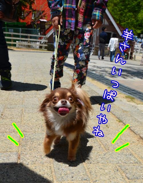 DSC_3904.jpg