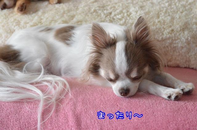 DSC_4295.jpg