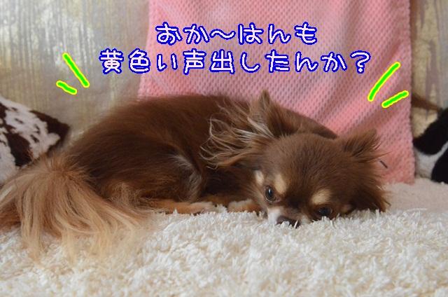 DSC_4318_201406082047354f6.jpg