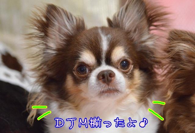 DSC_4350_20140607220926a95.jpg