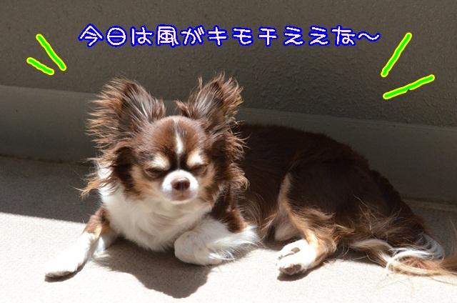 DSC_4358_20140614171149365.jpg