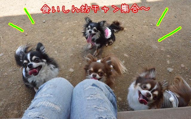 DSC_4709_2014062518571953a.jpg