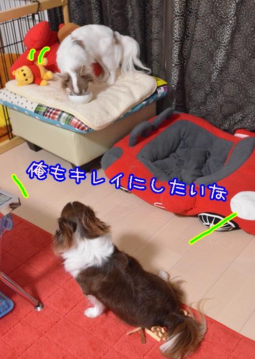 DSC_4830_20140701153839006.jpg