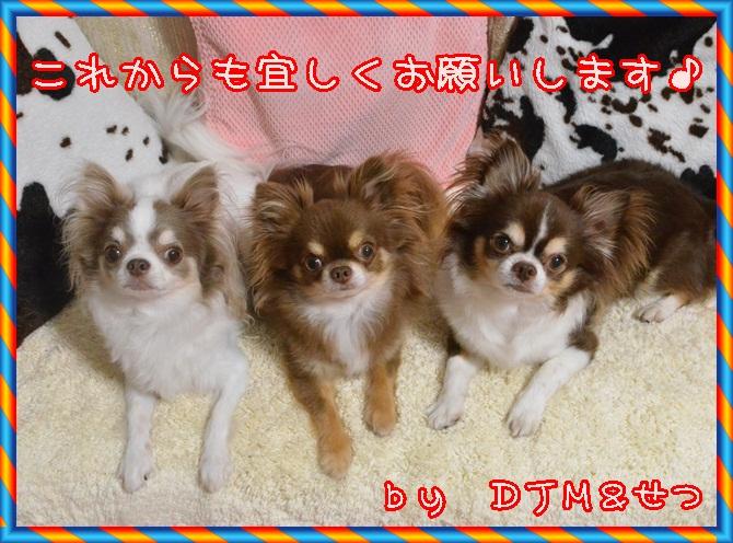 DSC_4838.jpg