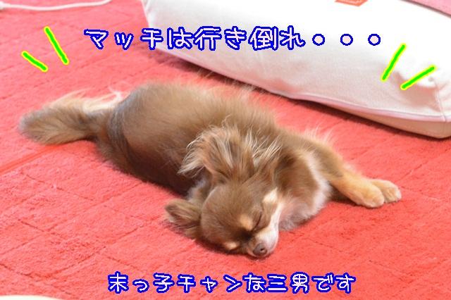 DSC_4844_201407041904530ce.jpg