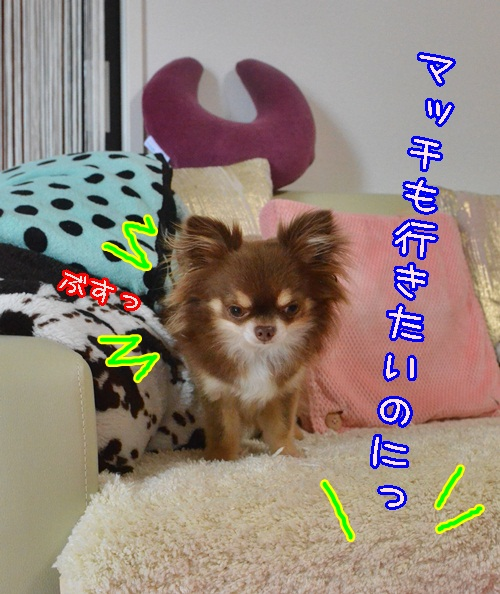 DSC_4849_20140705193929423.jpg