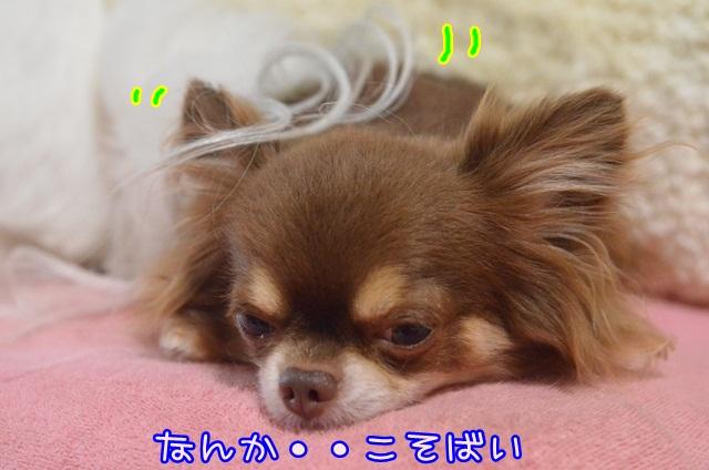 DSC_4927.jpg