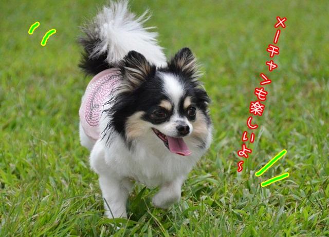 DSC_5137_201407281609183aa.jpg