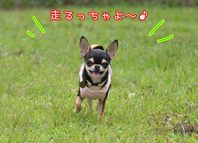 DSC_5138.jpg