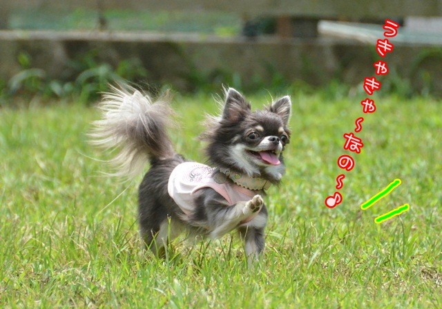 DSC_5152_20140728160837ea7.jpg
