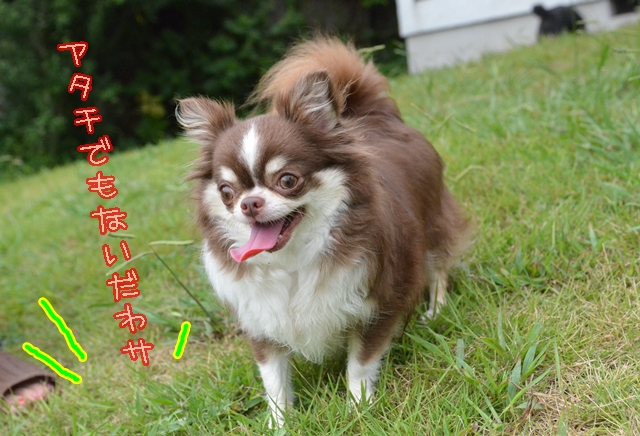 DSC_5998_20140812172546962.jpg