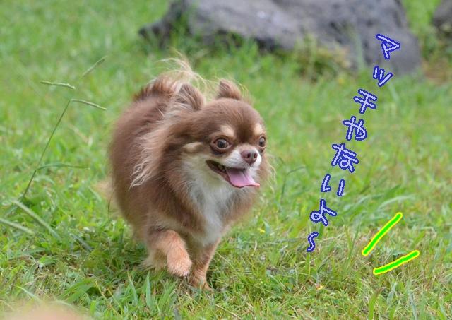 DSC_6032_2014081217272497b.jpg