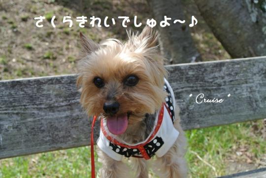 DSC_1040_convert_20140406114731.jpg