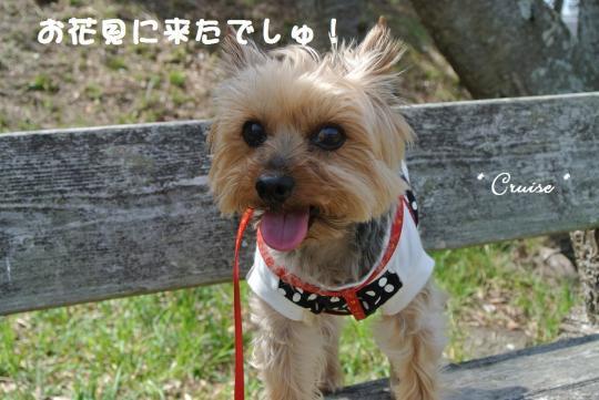 DSC_1041_convert_20140406114747.jpg