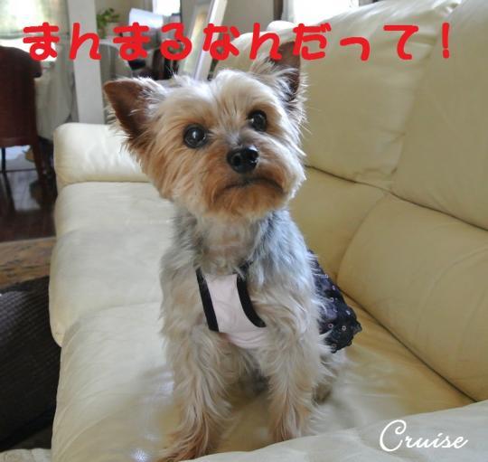 DSC_1302_convert_20140424233648.jpg