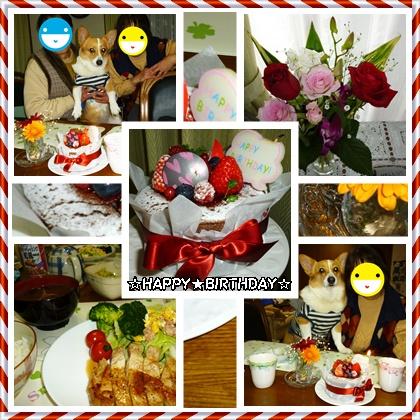 cats_201402151006335b9.jpg