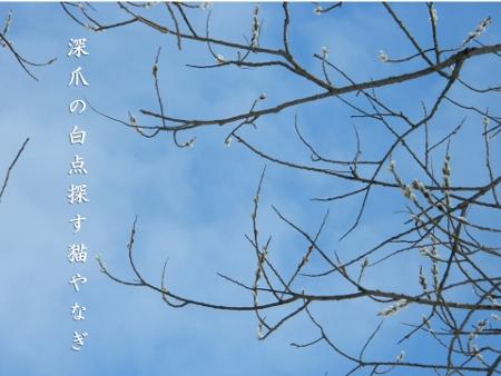 柳ヤマチプレゼント猫 (450x338)