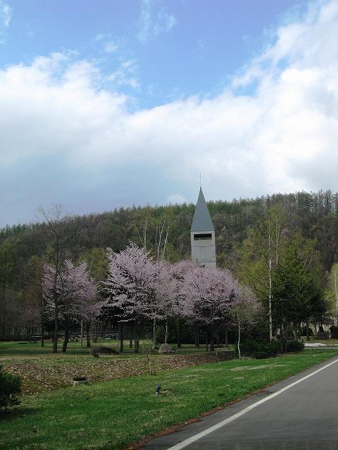 s-インフォの桜