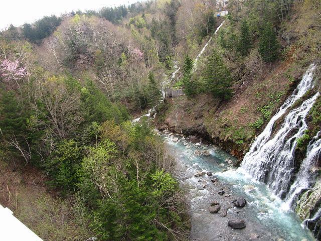 s-滝と桜