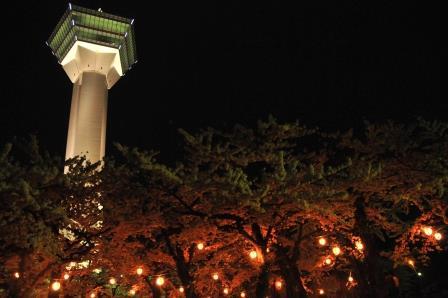 夜桜 五稜郭にて