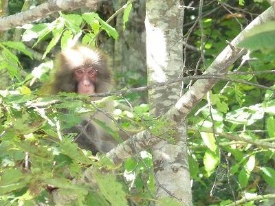 お猿さん1