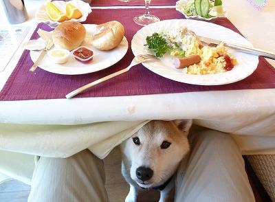 Pサンテミリオンさん朝食~