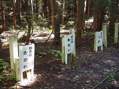 ヒバ実験林