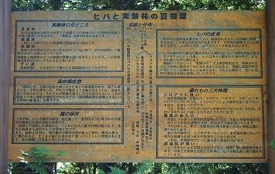 ヒバ実験林豆知識