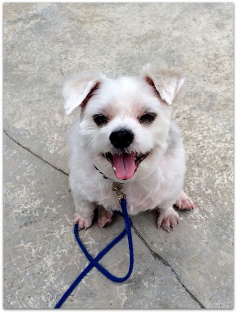 愛犬 ポール ペット
