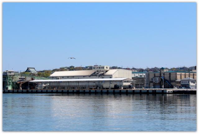 青森県 八戸市 海 港 八戸港 工業港 国際貿易港 うみねこ 写真 八戸魚市場