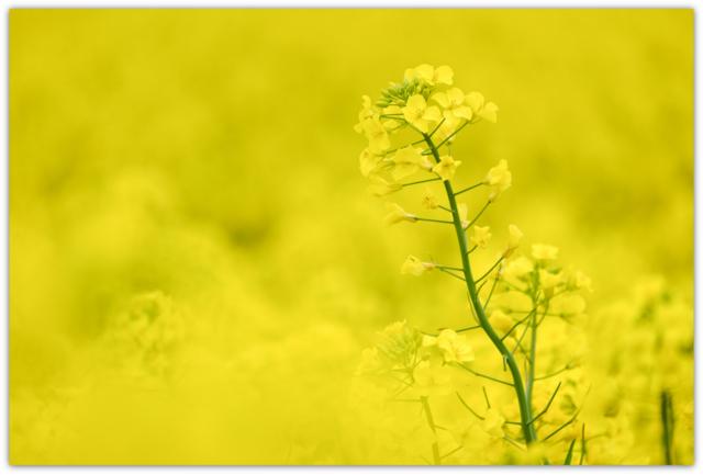 青森県 横浜町 スポーツ 写真 出張 撮影 スナップ カメラマン 写真館 イベント フリーカメラマン 全国 青森 弘前 マラソン 写真 撮影