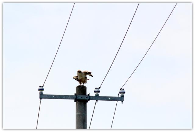 猛禽類 写真 鳥