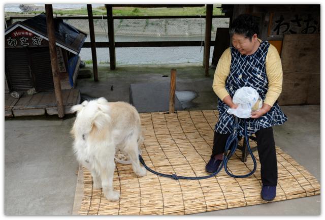 青森県 鰺ヶ沢町 わさお 犬 観光 ネコ