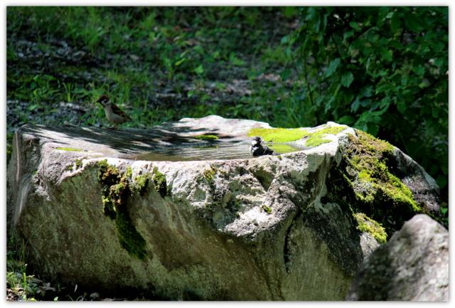ヒガラ 野鳥 鳥 とり トリ 写真