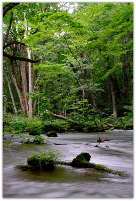 青森県 観光 十和田湖 奥入瀬渓流