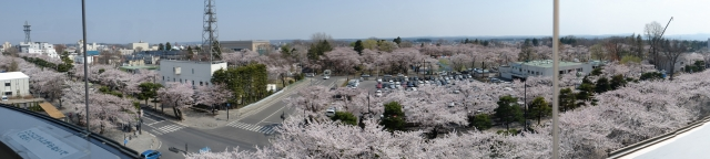 青森県 十和田市 観光 イベント 桜 十和田市役所 5階 展望ロビー 写真