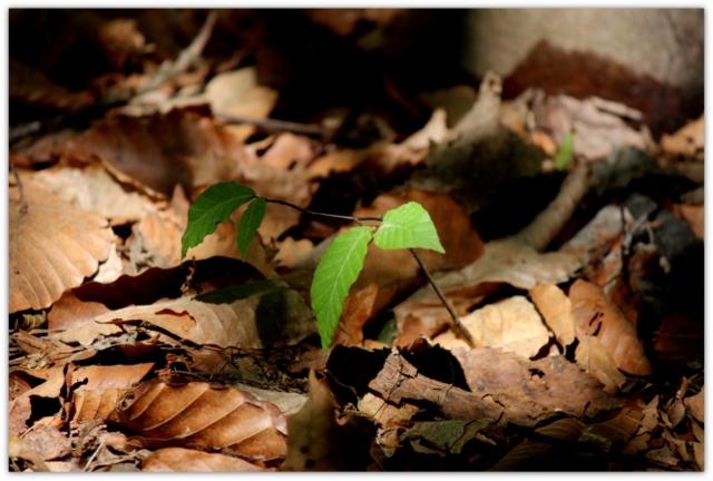 弘前城植物園 白神山地生態園 植物 写真