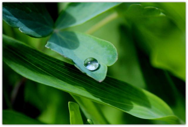 雨上がり 滴 しずく 水滴 植物 写真 自然