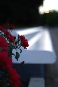 まくりんさん ベンチと赤いバラ