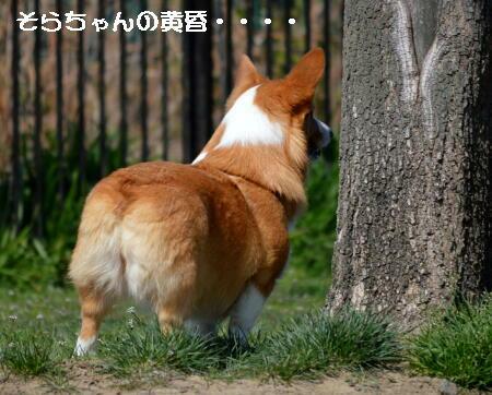2014032406.jpg