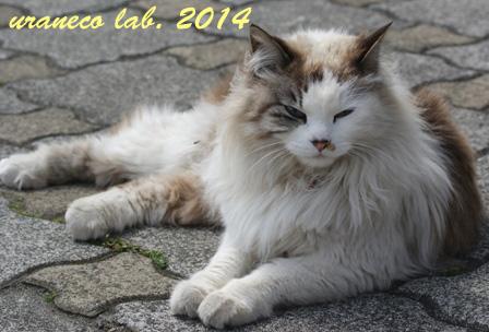 2月28日もふもふ猫